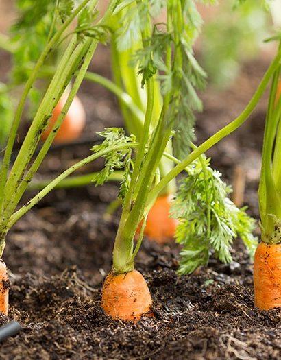 Hortalizas que son fáciles de cultivar en casa