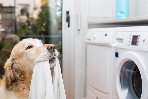 El pelo de mascotas puede dañar nuestras lavadoras